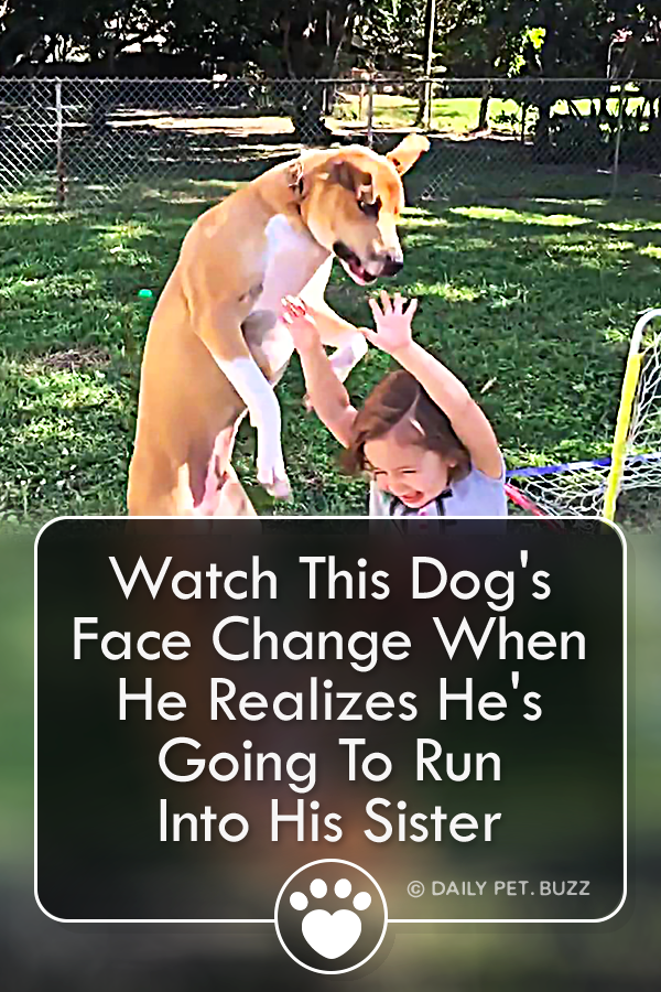 Watch This Dog\'s Face Change When He Realizes He\'s Going To Run Into His Sister