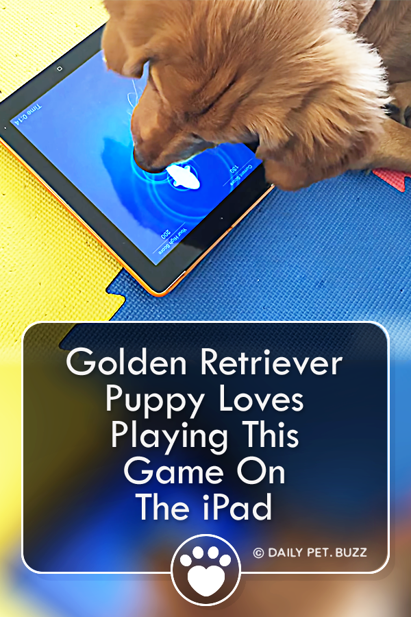 Golden Retriever Puppy Loves Playing This Game On The iPad