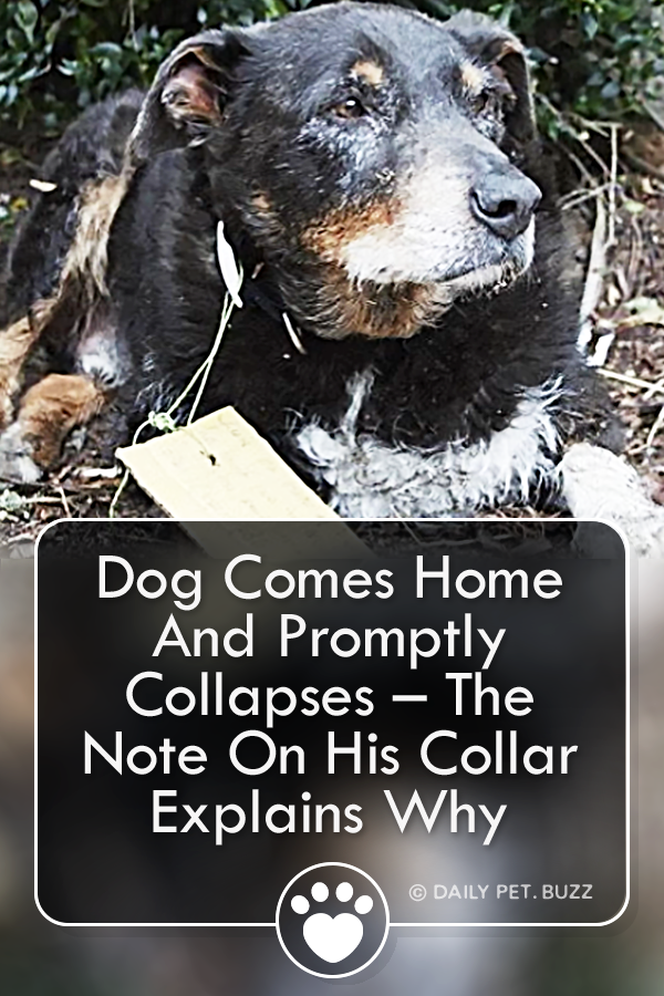 Dog Comes Home And Promptly Collapses – The Note On His Collar Explains Why