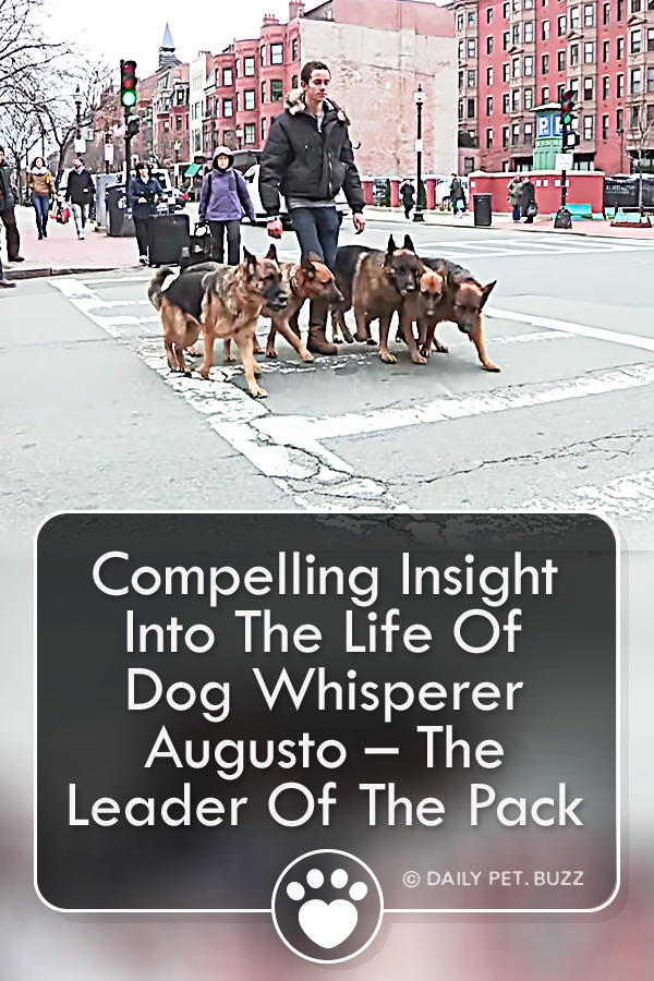 Compelling Insight Into The Life Of Dog Whisperer Augusto – The Leader Of The Pack