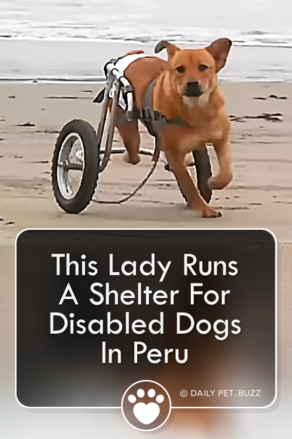 This Lady Runs A Shelter For Disabled Dogs In Peru
