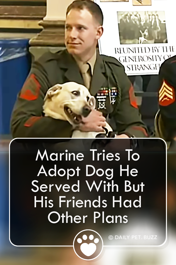 Marine Tries To Adopt Dog He Served With But His Friends Had Other Plans