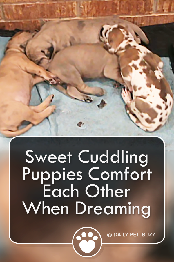 Sweet Cuddling Puppies Comfort Each Other When Dreaming