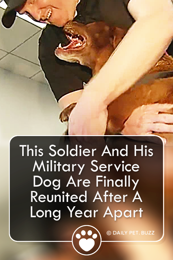This Soldier And His Military Service Dog Are Finally Reunited After A Long Year Apart