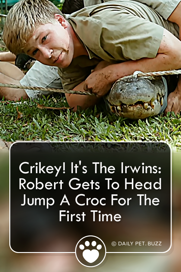 Crikey! It\'s The Irwins: Robert Gets To Head Jump A Croc For The First Time