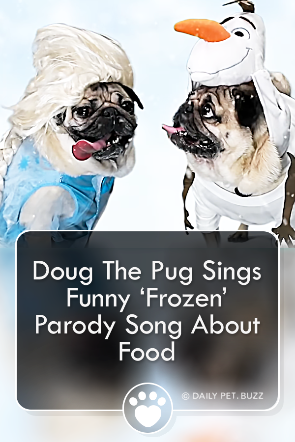 Doug The Pug Sings Funny 'Frozen' Parody Song About Food