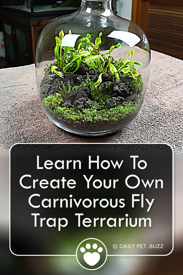 Learn How To Create Your Own Carnivorous Fly Trap Terrarium