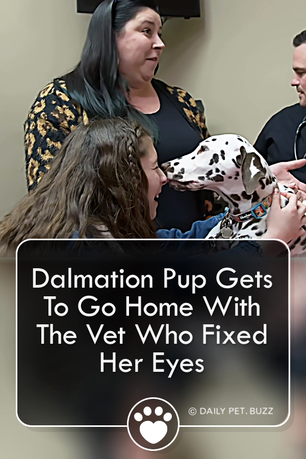 Dalmation Pup Gets To Go Home With The Vet Who Fixed Her Eyes