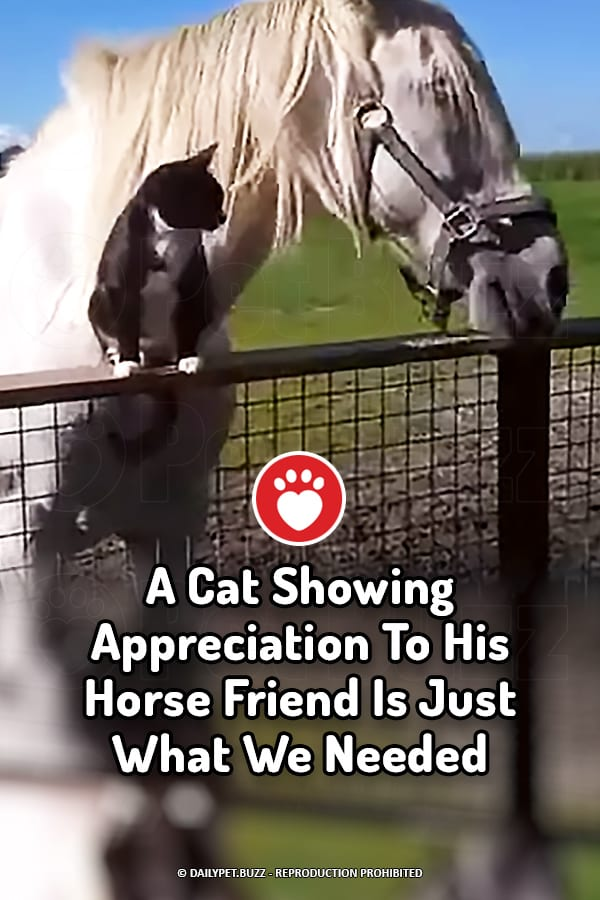 A Cat Showing Appreciation To His Horse Friend Is Just What We Needed
