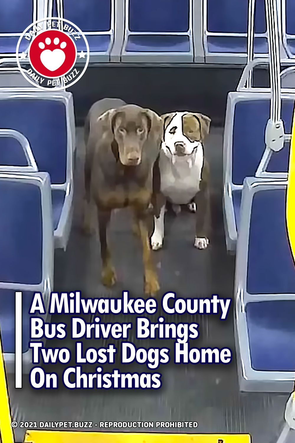 A Milwaukee County Bus Driver Brings Two Lost Dogs Home On Christmas