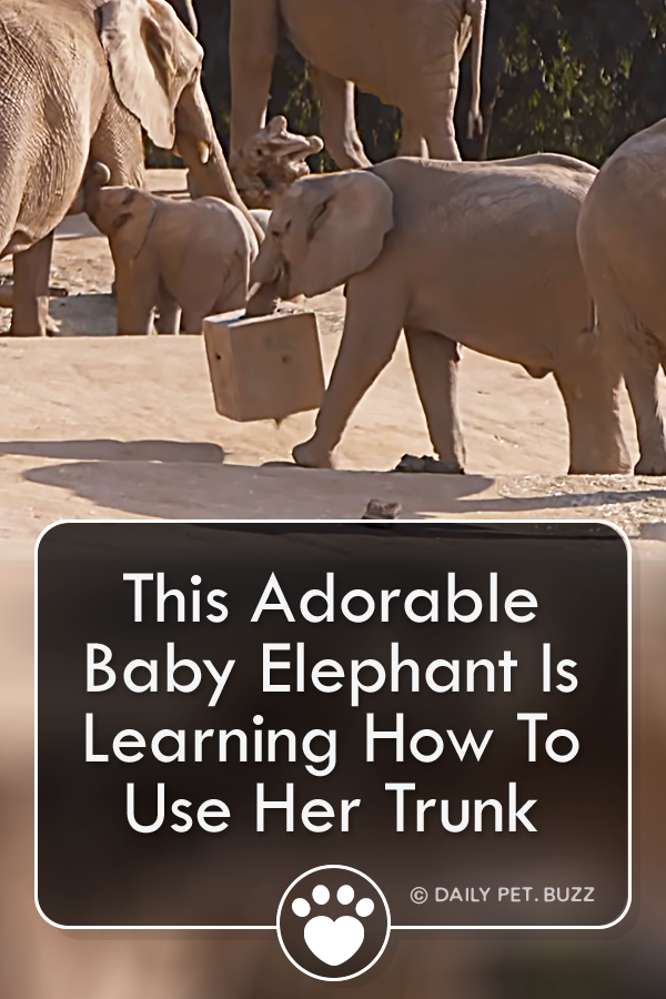 This Adorable Baby Elephant Is Learning How To Use Her Trunk