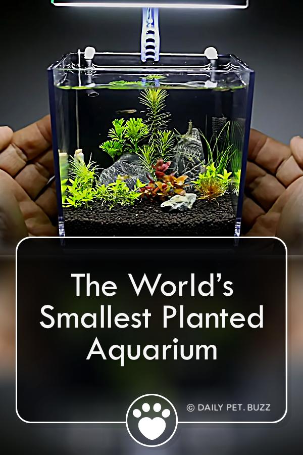 The World's Smallest Planted Aquarium