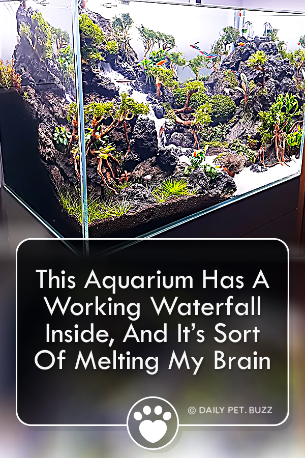 This Aquarium Has A Working Waterfall Inside, And It's Sort Of Melting My Brain
