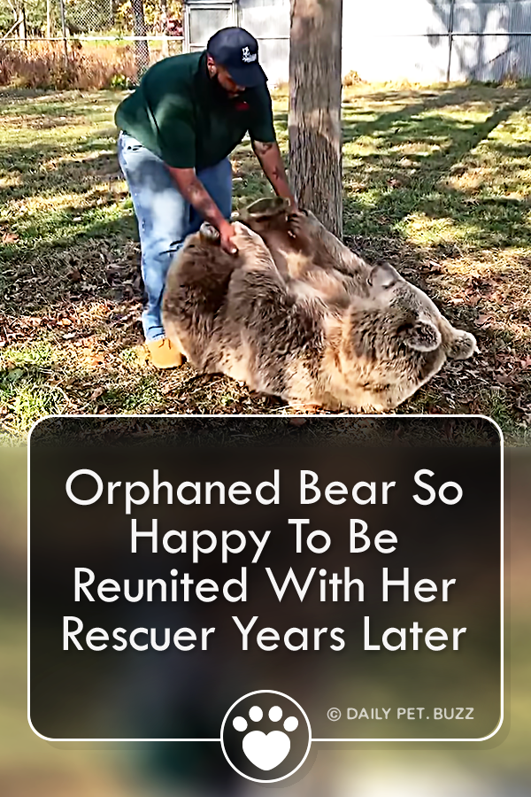 Orphaned Bear So Happy To Be Reunited With Her Rescuer Years Later