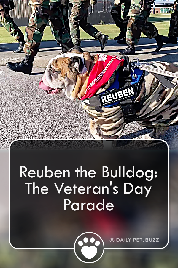 Reuben The Bulldog Rode A Parade Float And Charmed The Audience