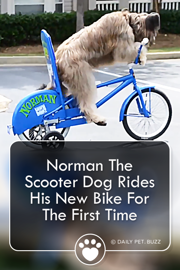 Norman The Scooter Dog Rides His New Bike For The First Time