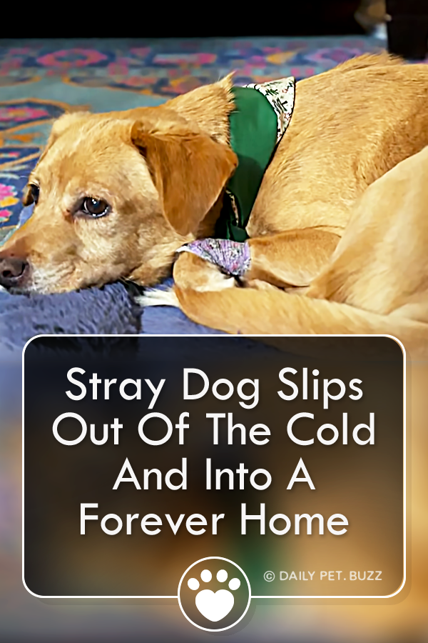 Stray Dog Slips Out Of The Cold And Into A Forever Home