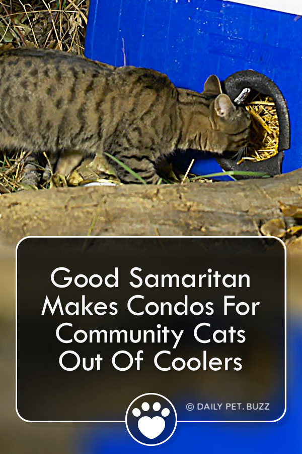 Good Samaritan Makes Condos For Community Cats Out Of Coolers