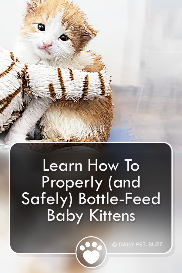 Learn How To Properly (and Safely) Bottle-Feed Baby Kittens