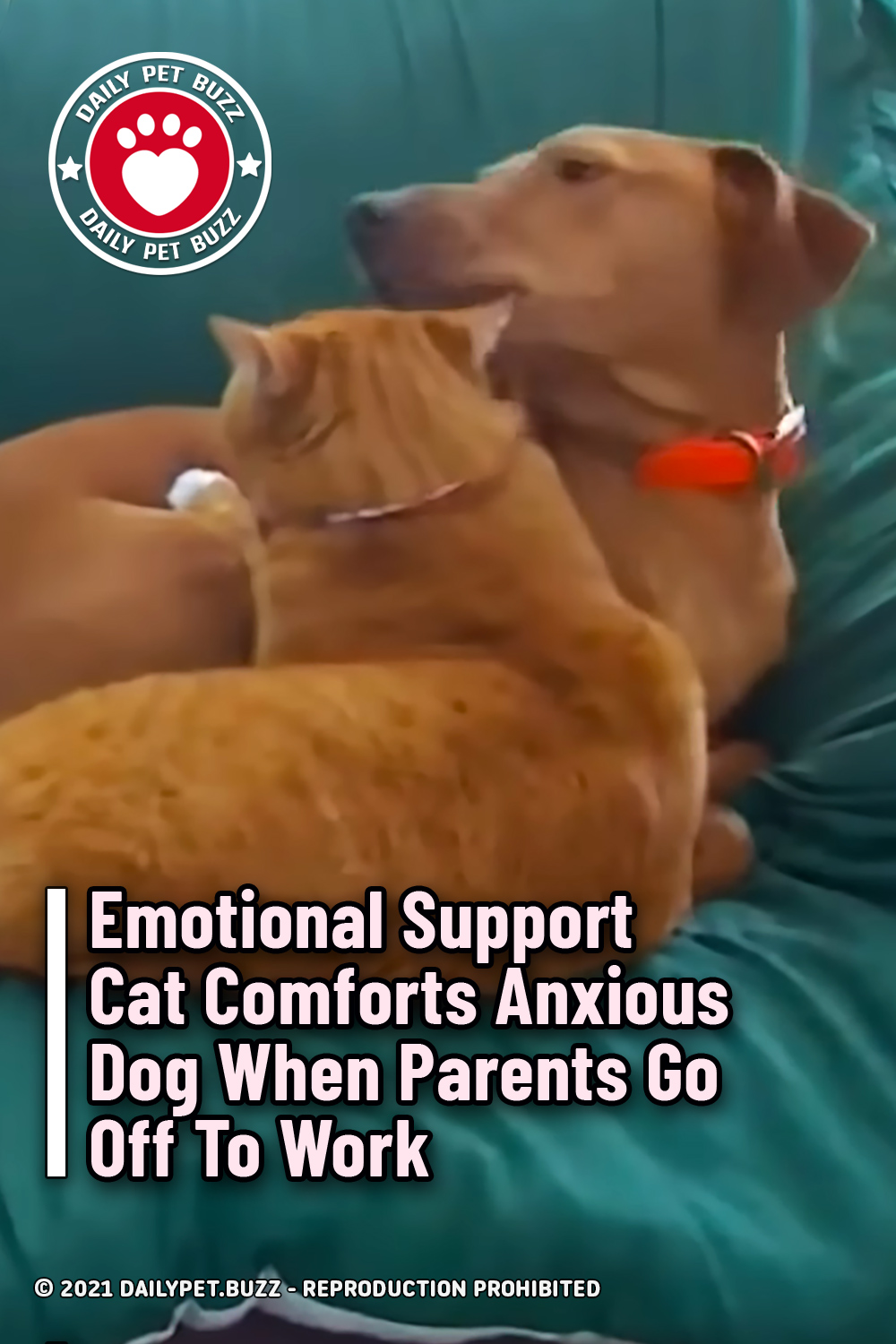 Emotional Support Cat Comforts Anxious Dog When Parents Go Off To Work