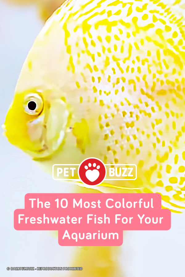 The 10 Most Colorful Freshwater Fish For Your Aquarium