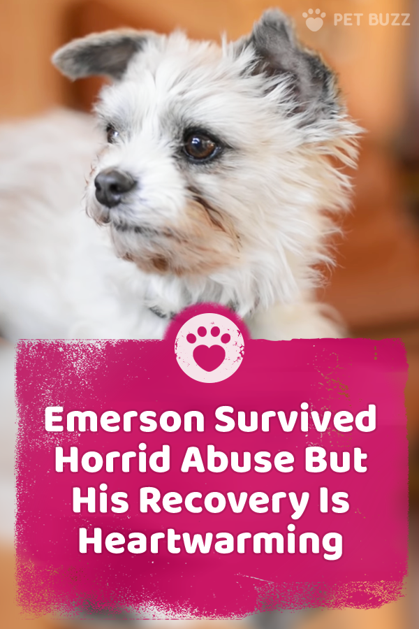 Emerson Survived Horrid Abuse But His Recovery Is Heartwarming