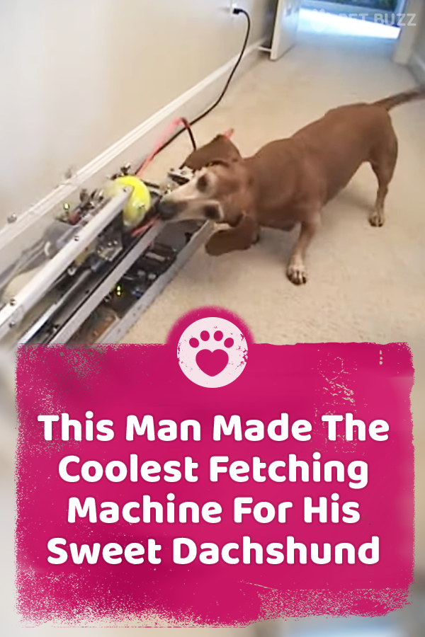 This Man Made The Coolest Fetching Machine For His Sweet Dachshund