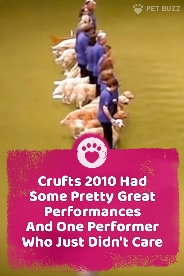 Crufts 2010 Had Some Pretty Great Performances And One Performer Who Just Didn\'t Care