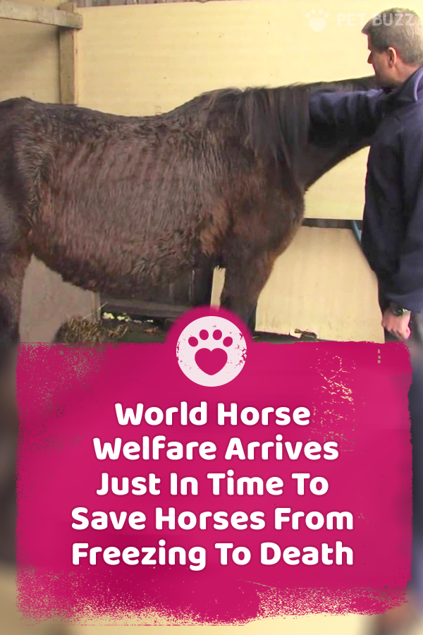 World Horse Welfare Arrives Just In Time To Save Horses From Freezing To Death