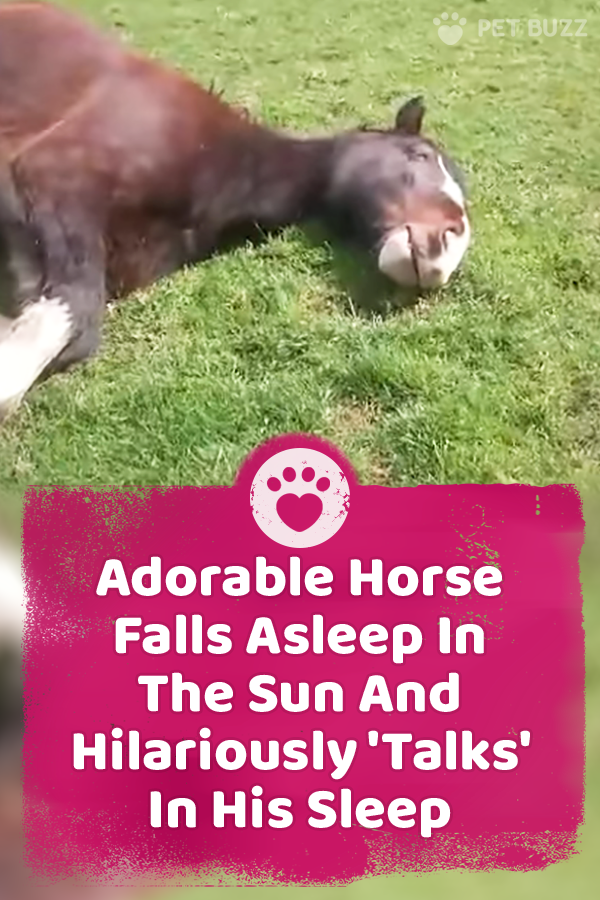 Adorable Horse Falls Asleep In The Sun And Hilariously \'Talks\' In His Sleep