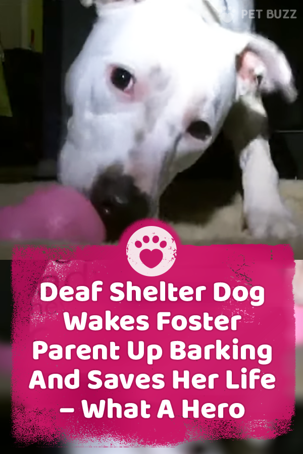 Deaf Shelter Dog Wakes Foster Parent Up Barking And Saves Her Life – What A Hero