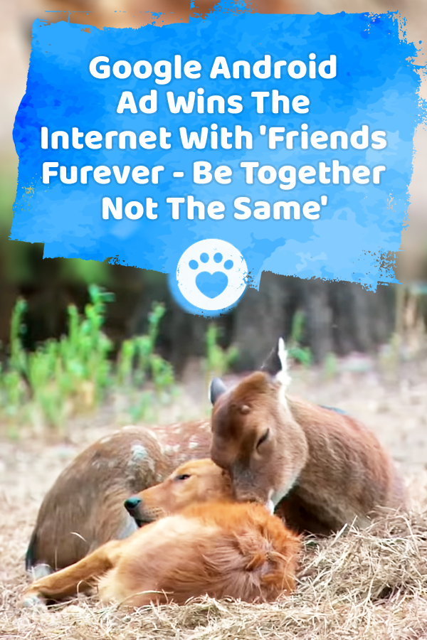 Google Android Ad Wins The Internet With \'Friends Furever - Be Together Not The Same\'