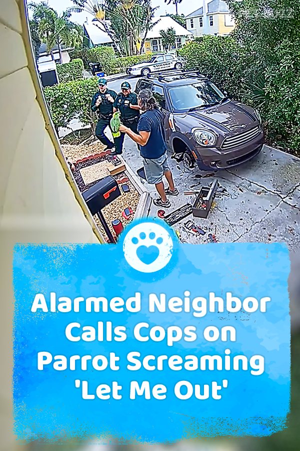 Alarmed Neighbor Calls Cops on Parrot Screaming \'Let Me Out\'