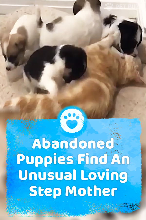 Abandoned Puppies Find An Unusual Loving Step Mother