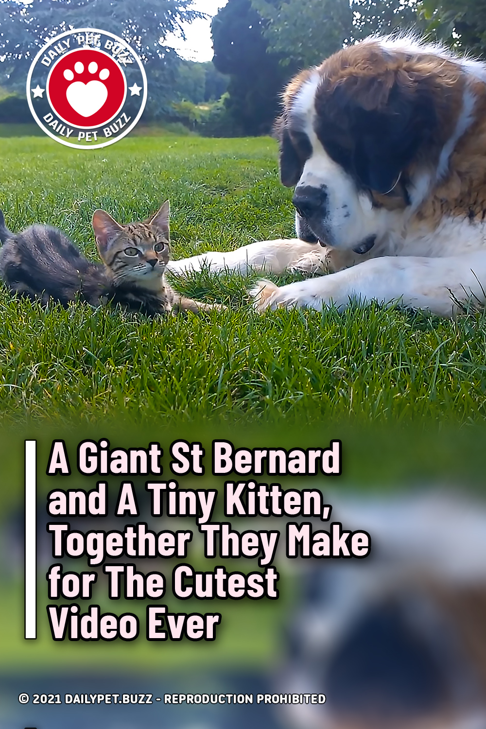 A Giant St Bernard and A Tiny Kitten, Together They Make for The Cutest Video Ever