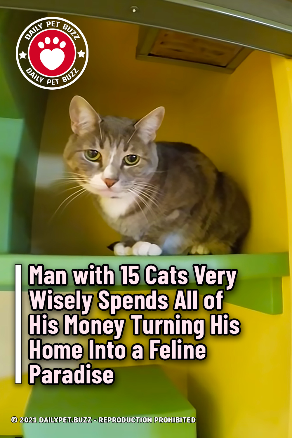 Man with 15 Cats Very Wisely Spends All of His Money Turning His Home Into a Feline Paradise