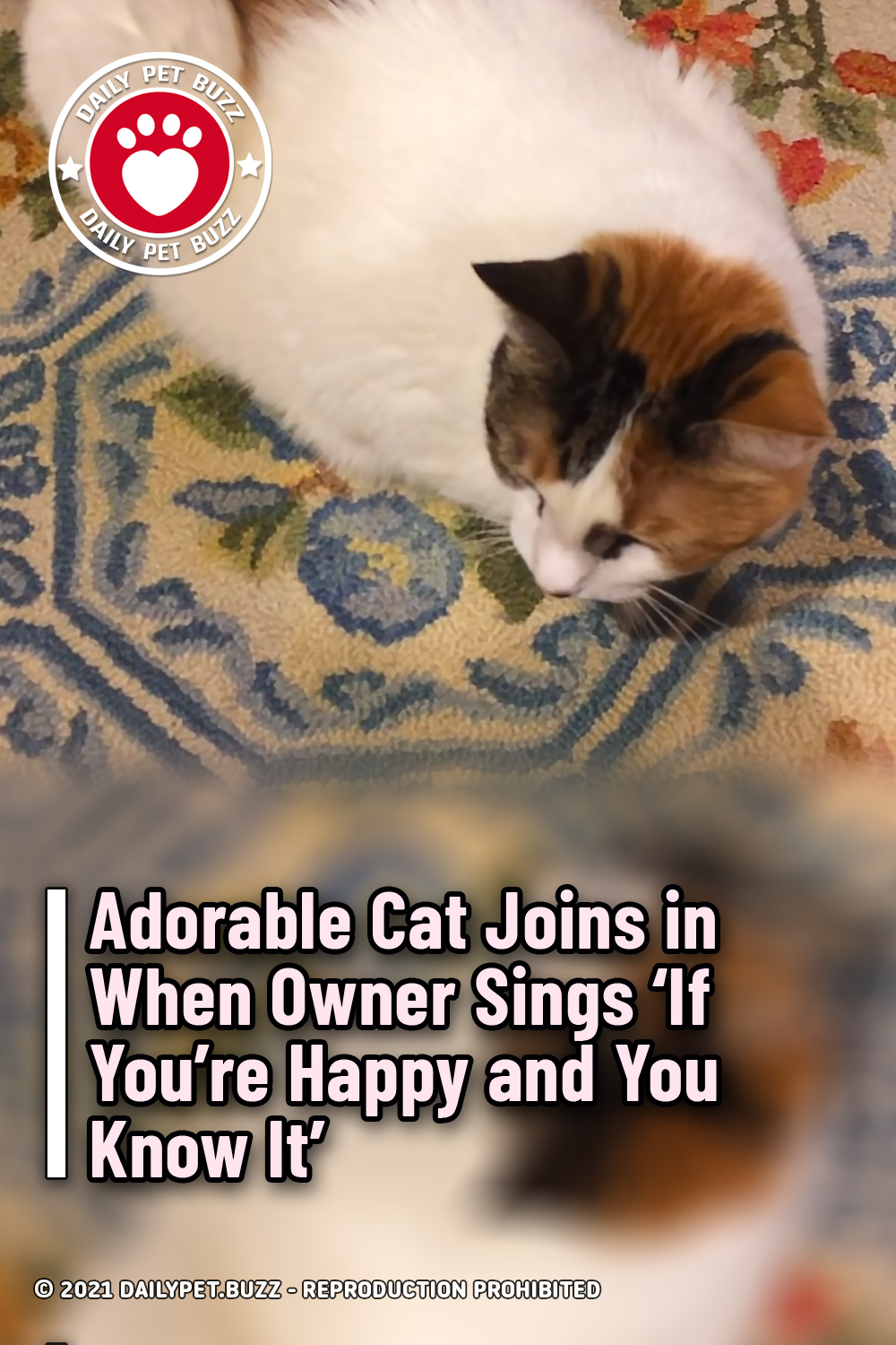 Adorable Cat Joins in When Owner Sings \'If You're Happy and You Know It\'