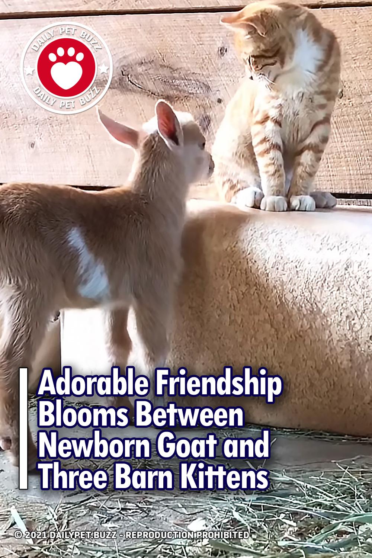 Adorable Friendship Blooms Between Newborn Goat and Three Barn Kittens