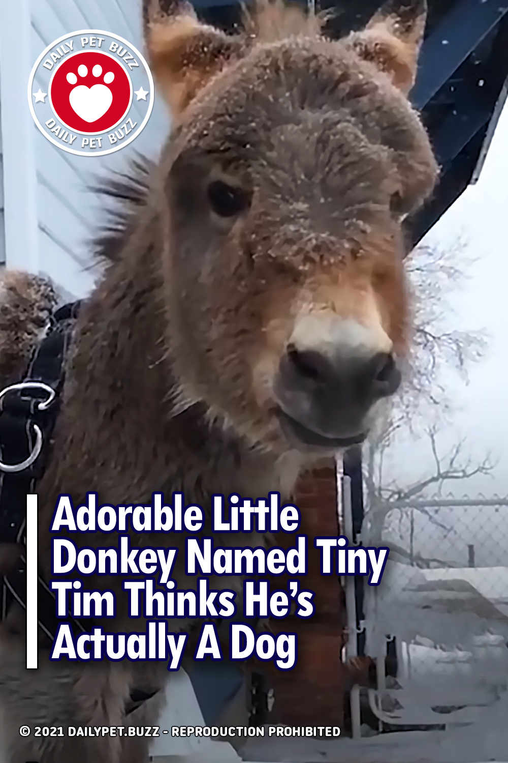 Adorable Little Donkey Named Tiny Tim Thinks He\'s Actually A Dog