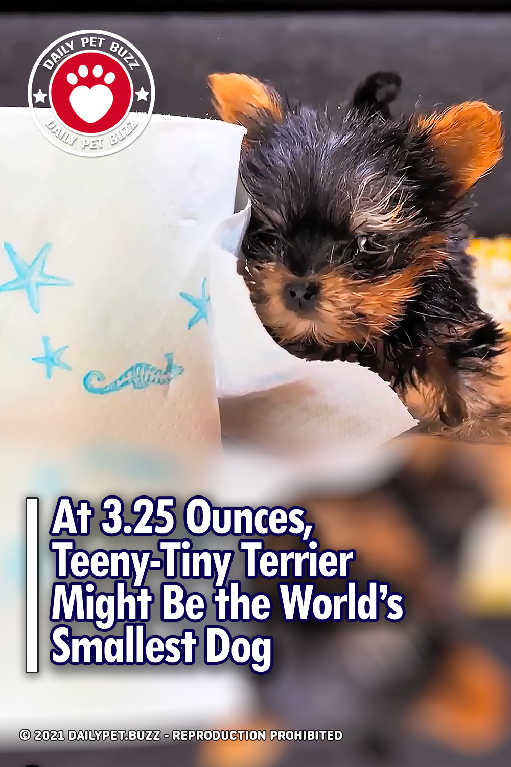 At 3.25 Ounces, Teeny-Tiny Terrier Might Be the World's Smallest Dog