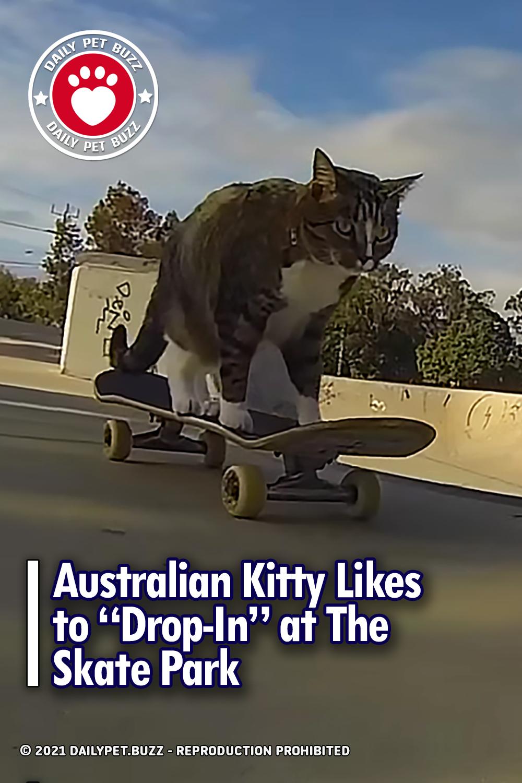 Australian Kitty Likes to \