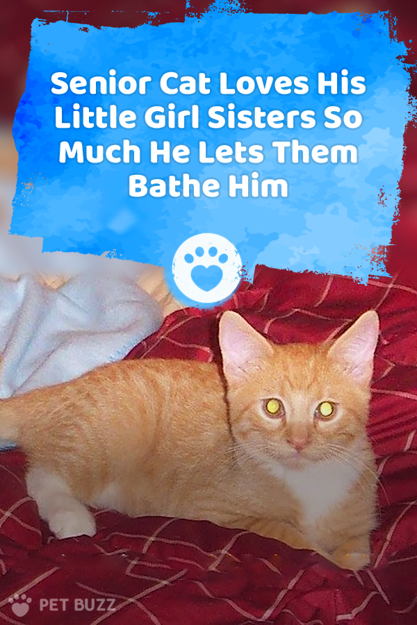 Senior Cat Loves His Little Girl Sisters So Much He Lets Them Bathe Him