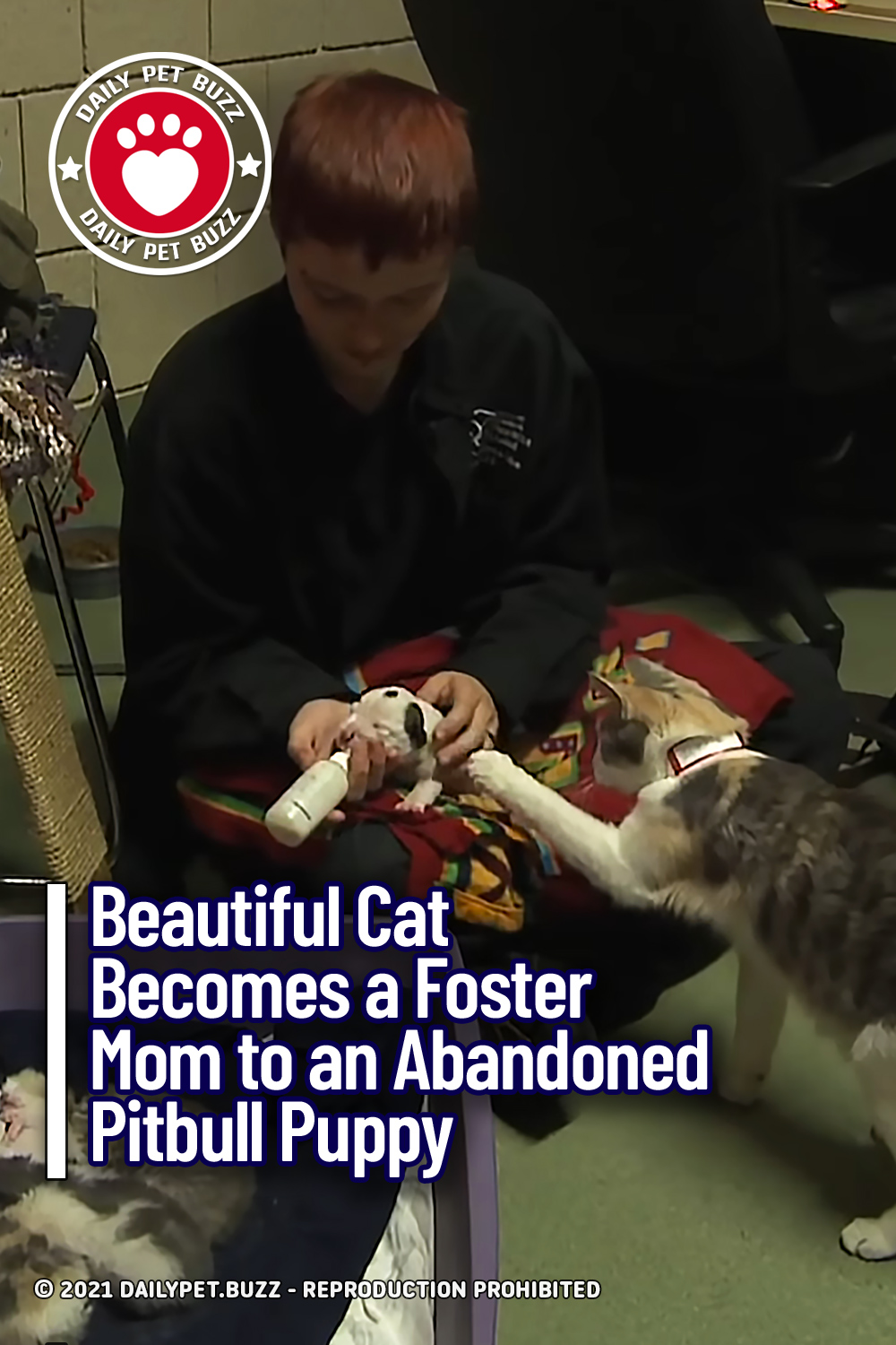 Beautiful Cat Becomes a Foster Mom to an Abandoned Pitbull Puppy