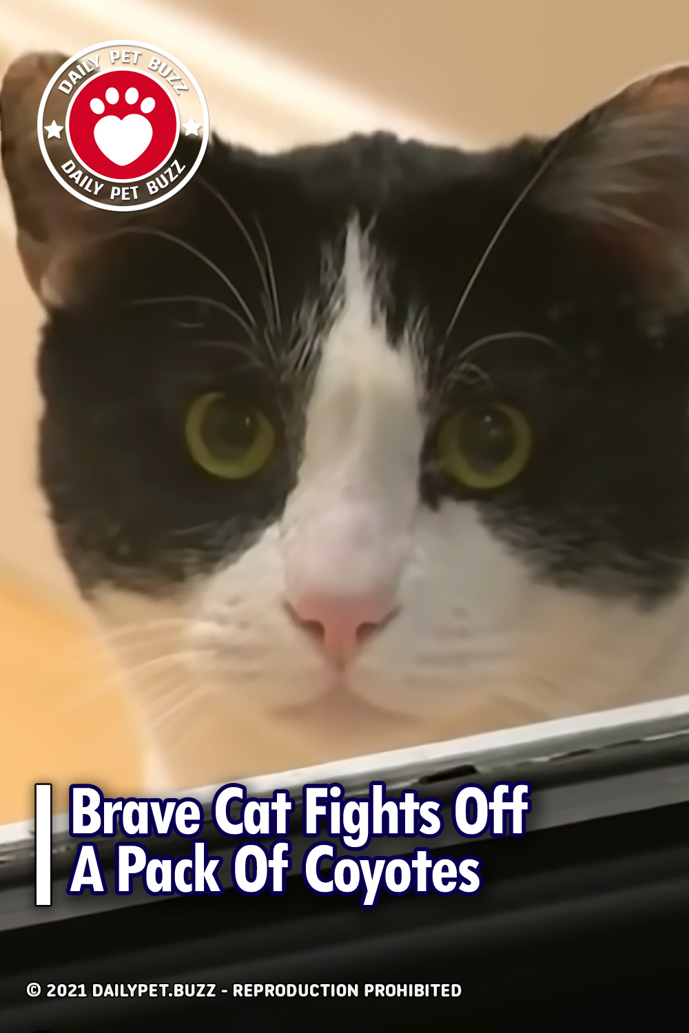 Brave Cat Fights Off A Pack Of Coyotes