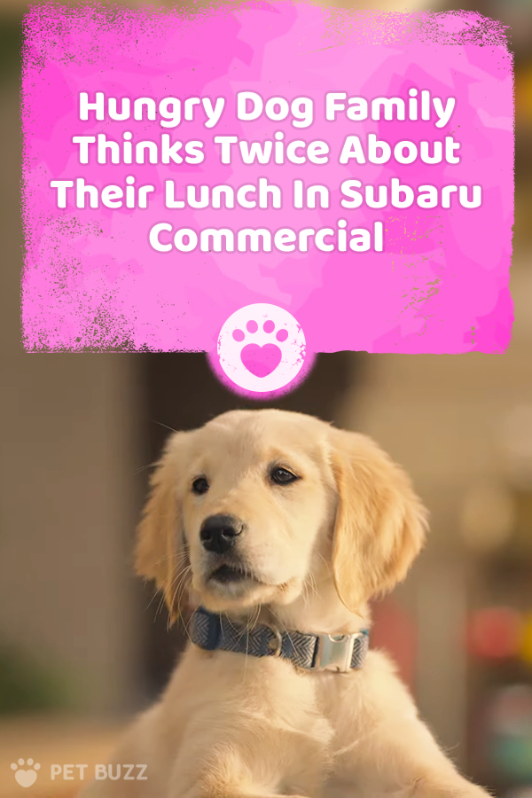 Hungry Dog Family Thinks Twice About Their Lunch In Subaru Commercial