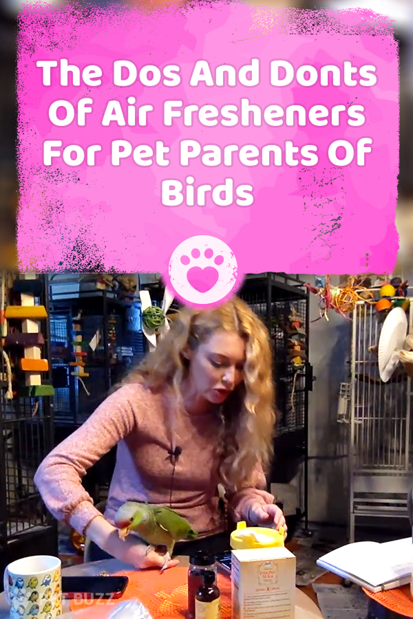 The Dos And Donts Of Air Fresheners For Pet Parents Of Birds