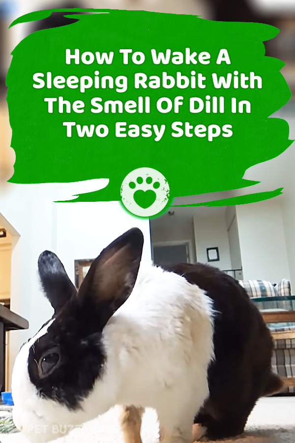 How To Wake A Sleeping Rabbit With The Smell Of Dill In Two Easy Steps