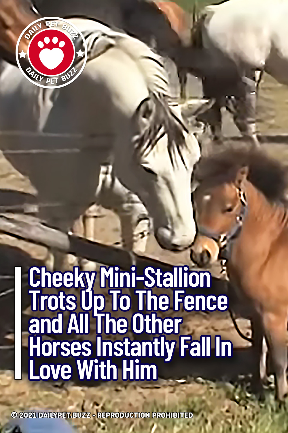 Cheeky Mini-Stallion Trots Up To The Fence and All The Horses Fall In Love With Him