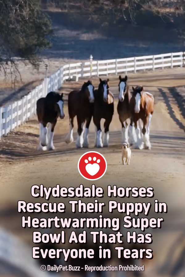 Clydesdale Horses Rescue Their Puppy in Heartwarming Super Bowl Ad That Has Everyone in Tears