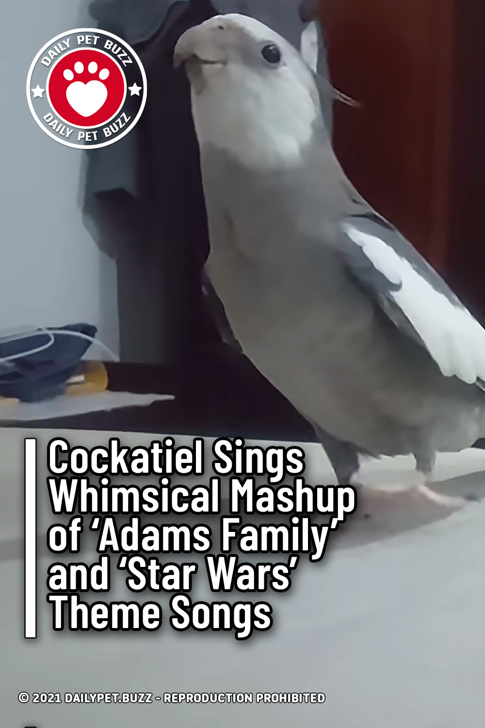 Cockatiel Sings Whimsical Mashup of \'Adams Family\' and \'Star Wars\' Theme Songs